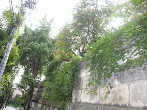 Bunkyo-ku has proximity to greenery