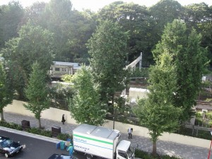 Greenery of Meijijingu is visible from a vacant shop in Harajuku