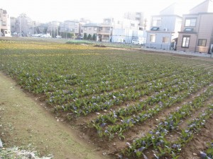 a vegetable field 5-min walk from Mizue station