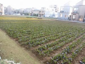 a vegetable field 5-min walk from Mizue station