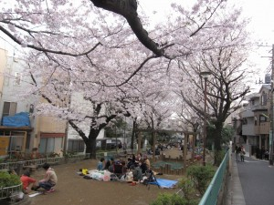 a viewing of cherry blossoms at a public park in Tokyo